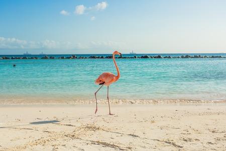 Flamingos sur la plage d'Aruba. plage Flamingo Banque d'images - 67401133