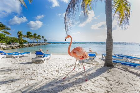 Three flamingos on the beach Stock Photo