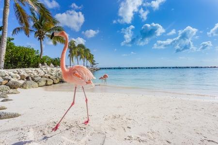 Three flamingos on the beach Stockfoto
