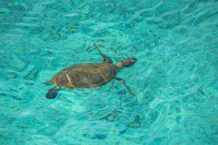 Swimming with Turtles on the Caribbean Island of Curacao Standard-Bild