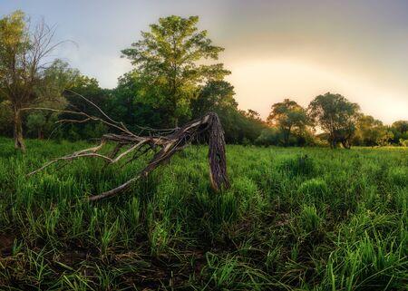 Windbreak, dry tree in marshland, summer landscape of wild forest, 스톡 콘텐츠