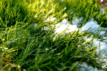 Conceptual photo of spring going after winter. Green grass growing through snow