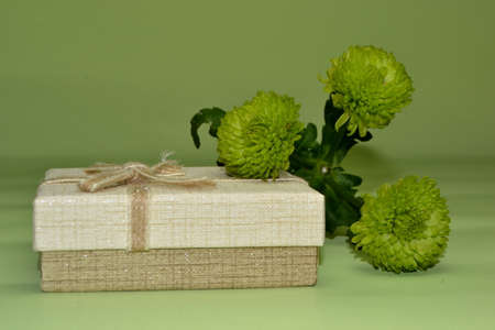 green chrysanthemum flower and present close up on light green background