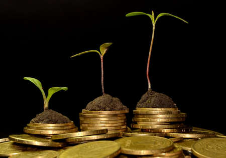Business investment growth concept. tree piles of coins with small trees. 版權商用圖片