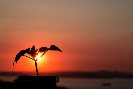 Beautiful red sunset, against which a flower grows. New life. Against the sea..
