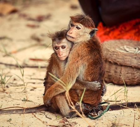 true: Two monkeys hugging - true love Stock Photo
