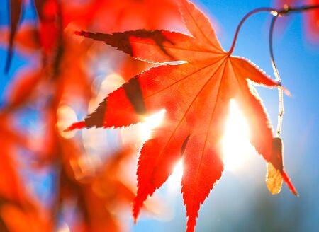 Baum verlässt den Sonnenschein
