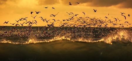 wildlife of birds, Lots of seagulls hovering over the stormy sea at sunset Standard-Bild