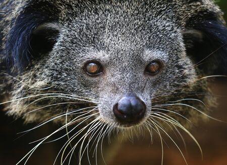 unusual and rare animals Standard-Bild