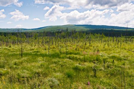 lejano oriente: Pantano en la taiga del Lejano Oriente n proximidades de la cresta Badzhalsky en el territorio de Jab�rovsk. Foto de archivo