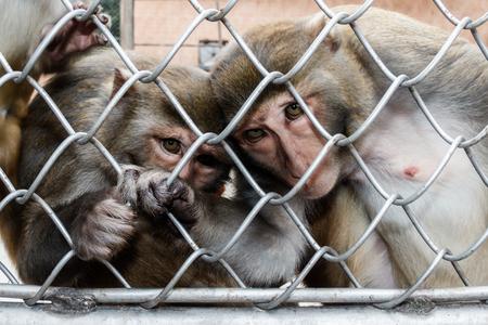 sukhumi: Monkeys in a monkey house in Sukhumi, Abkhazia