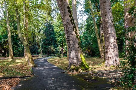 sukhumi: Plane-tree avenue in park Sinop in the city of Suhum, Abkhazia