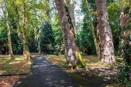 sukhumi: Plane-tree avenue in park Sinop in the city of Suhum, Abkhazia