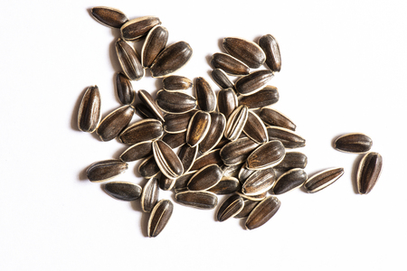 Huge Kuban seeds giants on a light white background