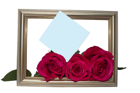 Roses scarlet as a gift to the girlfriend or the woman to make pleasant to a festive event or day of the angel Banco de Imagens