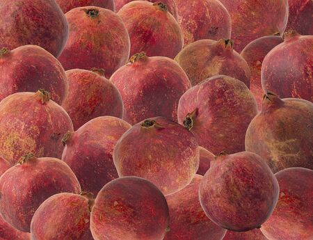 The fruit of ripe juicy pomegranate fruit with bags of seeds filled with bright red delicious and vitamin filled juice