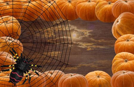 A spider weaving its net-trap of strong cobwebs on a pale background of the moon and a frame of a row of orange melons for the holiday of Halloween
