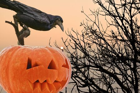 A black Raven on a branch hunts for a round Moon against an orange pumpkin and hard and prickly bushes