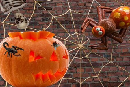 Burning eyes pumpkin with a predatory spider with a trap-web the head of a Scorpion skeleton and a fly on the background of a brick wall for Halloween 版權商用圖片