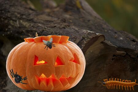 Halloween orange pumpkin fly centipede and spider on the background of birch stump for the holiday of Halloween