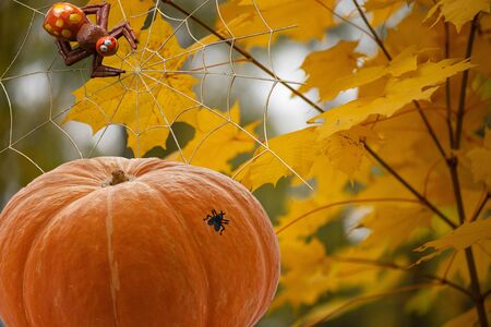 Orange pumpkin with a fly on a barrel a spider on a web on a background of yellow blurred maple leaves 版權商用圖片