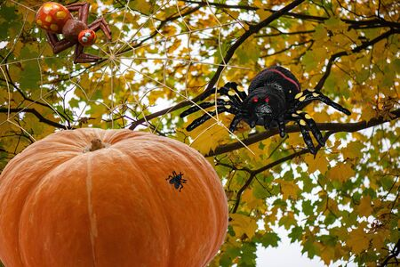 Orange pumpkin for Halloween day with different characters like skeleton centipede spider web bats crows and flies on different backgrounds