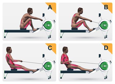 Stellen Sie eine visuelle Abfolge der Muskeln der Ausbildung auf einem Rudergerät Standard-Bild - 45729798