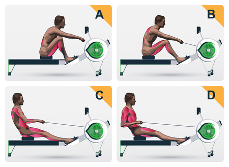 Set a visual sequence of the muscles of the training on a rowing machine