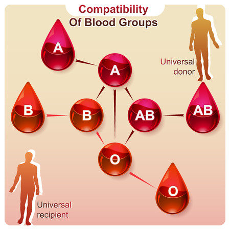 A visual representation of the compatibility of blood groups in infographics