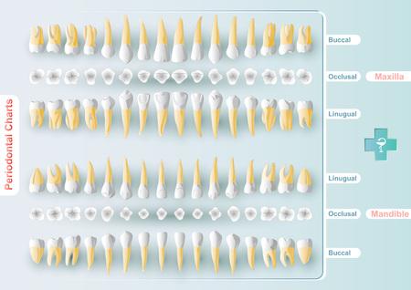 벡터 형식으로 양식 테이블 치과 및 치주 차트. 그것은 당신의 치아 건강에 대한 정보를 정리하는 그래픽 방법이다. 전문가 용 디자인 키트.