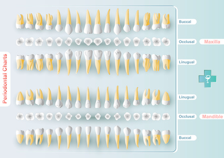 Form table Dental and Periodontal Charting in vector format. It is a graphic method of organizing information about your dental health. Design kit for professional use. Vectores