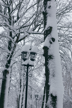 Photo of a winter park with large snowdrifts, trees and a street lamp Фото со стока