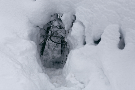Winter photo of a burrow or a passage of some kind of animal or beast with a beaten path in snowdrifts