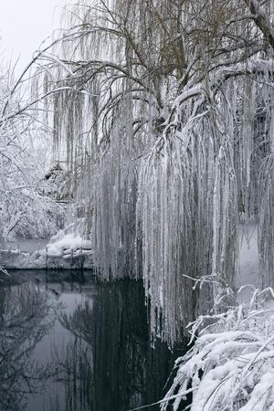 겨울 풍경 연못의 사진입니다. 많은 눈, 큰 snowdrifts, 흐림. 나무는 물 위에서 낮습니다.