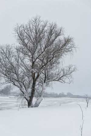 Photo of a winter landscape with a pond. A lot of snow, big snowdrifts, cloudy. The trees are low above the water. 版權商用圖片 - 94232820