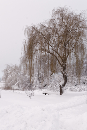 Photo of a winter landscape with trees. Snow-covered trees, branches and land with high snowdrifts 版權商用圖片 - 94226439