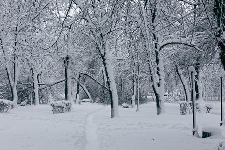 나무와 겨울 풍경 사진입니다. 눈 덮인 나무, 가지, 높은 snowdrifts가있는 땅 스톡 콘텐츠