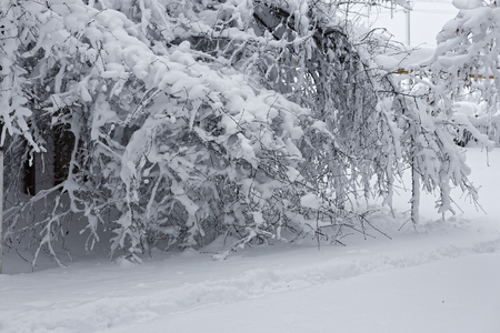 Photo of a winter landscape with trees. Snow-covered trees, branches and land with high snowdrifts 版權商用圖片 - 94232823