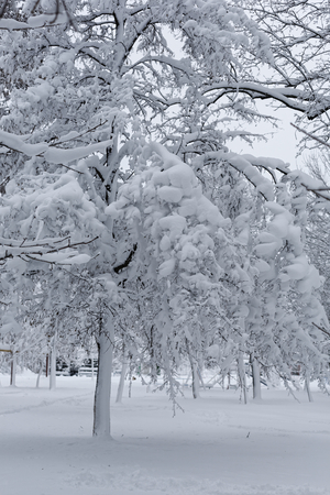 Photo of a winter landscape with trees. Snow-covered trees, branches and land with high snowdrifts Фото со стока