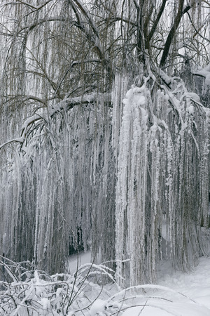 Photo of a winter landscape with trees. Snow-covered trees, branches and land with high snowdrifts 版權商用圖片 - 94226440