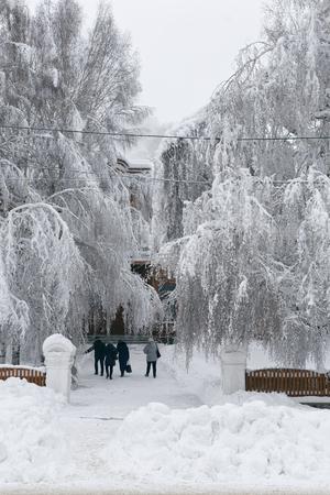 거리와 함께 겨울 풍경의 사진, 사람들이 걷는 눈 속에서 커다란 나무들.