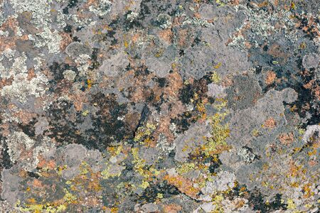 Photograph of granite stone texture. Old large granite stone covered with multi-colored moss. 版權商用圖片 - 128875867