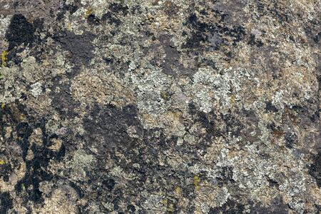 Photograph of granite stone texture. Old large granite stone covered with multi-colored moss. 免版税图像