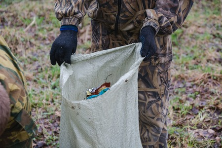 scavenge: cleaning of garbage in the wood. people scavenge in the wood. collecting garbage.