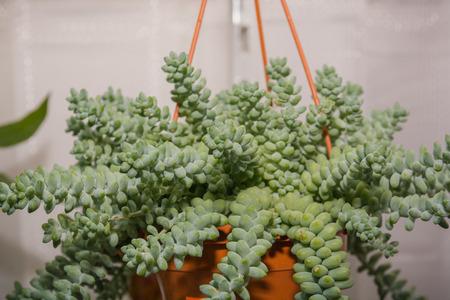 Window plants. Flowers stand houses on a window sill. Flowers in pots. Stok Fotoğraf - 89260017