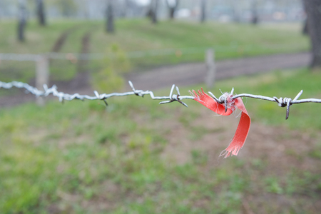 The barbed wire is tied on a fence with a red ribbon. Sharp wire hanging protecting from outsiders