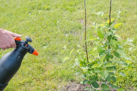 Spray the tree against insects. Sprayer from insects. Garden inverter. Gardener. Stock Photo
