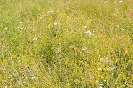 Flowering meadow in Russia. Infinite field. Different herbs and flowers in the field. Stock Photo