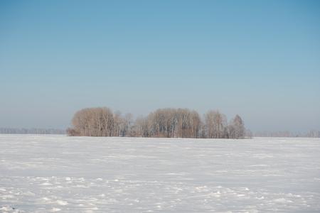 Birch forest in winter. Birch in the snow. Winter forest. Siberian forest. Birch Stok Fotoğraf - 116783445