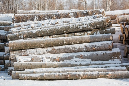Cut trees in piles in winter. Many tree trunks lying. Treating trees. Trees under the snow in winter. Stok Fotoğraf - 116783305